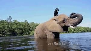 Animals Elephant Gif | PicGifs.com