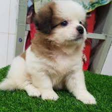 Petoneer Vietnam - Dụng cụ thông minh dành cho thú cưng - MÁY KHỬ MÙI DÀNH  CHO THÚ CƯNG NHÀ BẠN