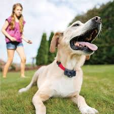 Best Wireless Dog Fence Setting Up Invisible Boundaries 2020 Jacks Pets