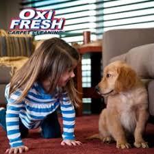 oxi fresh carpet cleaning 27 photos