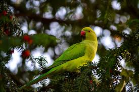 the story of the green parrots in