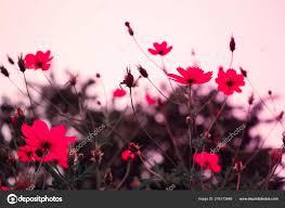 pink flower background nature spring