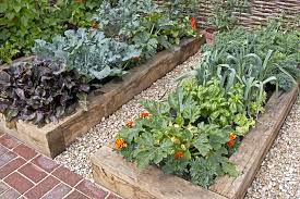 how to grow your own in a small garden