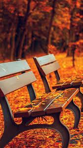 autumn fall leaves on roadside bench