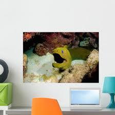 Toothless Green Moray Eel Wall Decal Wallmonkeys Com
