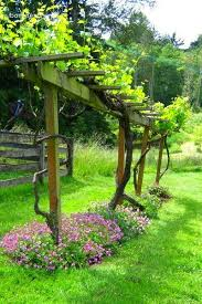 Growing Grapes In Home Garden And Can I Grow Grapes On A Fence In 2020 Vine Trellis Grape Vine Trellis Grape Trellis