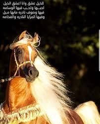 خلفيات خيول مكتوب عليها شعر