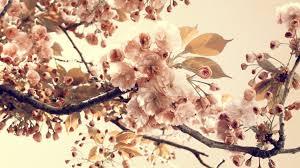 خلفيات ورود ناعمة صور و خلفيات الوليد Vintage Flower
