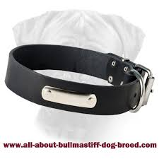 collar with nickel plated name plate