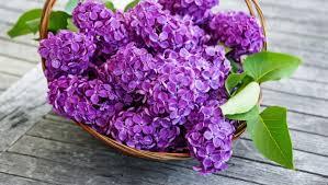 Duminica Floriilor: Cele mai inspirate URĂRI pentru cei cu nume de ...
