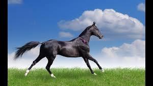 خلفيات خيول صور وخلفيات رائعة ومميزة للخيول Hd Youtube