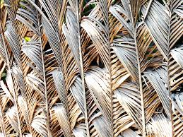 Palm Frond Fence 2 Shower Curtain For Sale By Ron Kandt