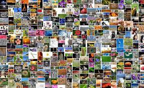 collage photo, flowers, birds, photos, images, photo collection, photo album,  mosaic, collage, recordings   Pxfuel