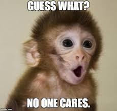 funny monkey flip