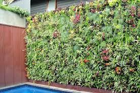 Top 10 Plants For Vertical Garden Top 10 Plants Nurserylive Wikipedia