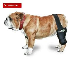 exercise for dogs how to strengthen a