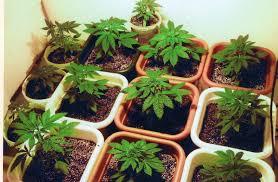 kitchen garden plants for beginners