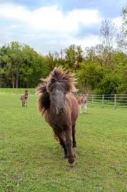Flex Fence Coated Wire Horse Fence Combinations In 2020 Horse Fencing Horses Types Of Horses