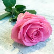 صور ورود روعه النظر اليه يجعلك سعيد صباح الورد
