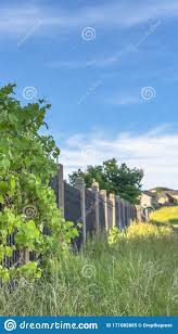 Vertical Frame Lush Vines With Vibrant Green Leaves Growing On The Black Metal Fence Of Homes Stock Image Image Of Sunny Greenery 171082665
