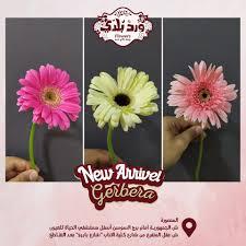 زهرة الچربيرا من الزهور الجميلة اللي Ward Balady ورد بلدي