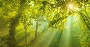 Descifrando las claves de la fotosíntesis