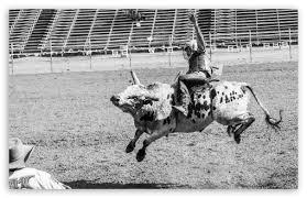 bull rider ultra hd desktop background