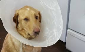 5 alternatives to the cone of shame