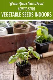 grow your own food how to start seeds