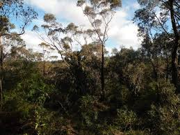 Sold Land Prices & Auction Results in Woodford, NSW 2778 Pg. 18 -  realestate.com.au