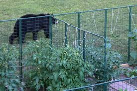 Garden Fencing Protection From Deer Rabbit Proof Critter Gardening Control