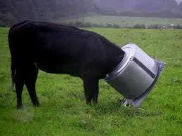 Animals Stuck In Odd Places That Don T Seem To Mind Home Facebook