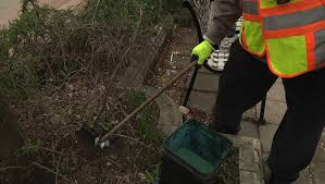 cities seeing surge in rodent plaints