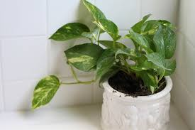 why you should put plants in the shower