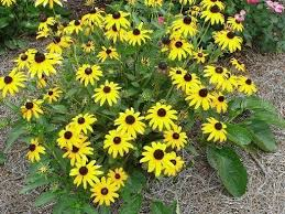which sun loving flowering plants do
