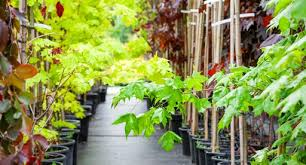 large tree planting guide