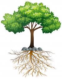Drzewo   Pobierz Darmowe Wektory, Zdjęcia i pliki PSD