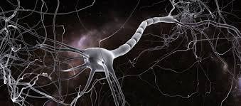 """Resultado de imagen de Axones del cerebro"""""""