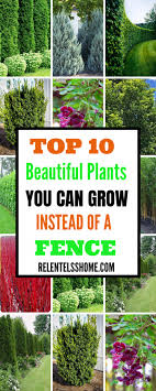 Top 10 Beautiful Plants You Can Grow Instead Of A Fence