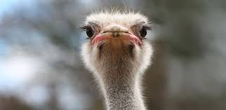 Are you an ostrich investor?