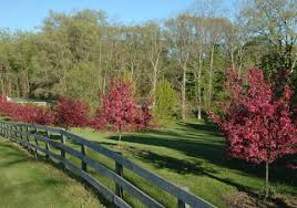 Fence Line With Prairifire Crab Gallery Dave Talboom Lawncare Landscape Landscaping And Lawncare Pride In Performance