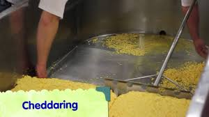 making wisconsin cheddar cheese curds