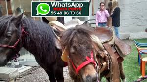 Ponys Renta | Lienzos Charros Eventos