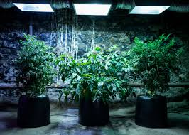 get growing with hydroponic gardening