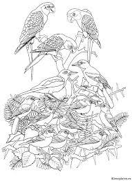 Vogels Kleurplaten Kleurplaten Eu