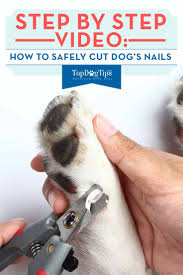 how to cut dog s nails correctly step