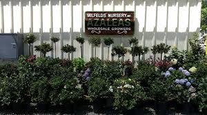 elds azalea nursery nurseries