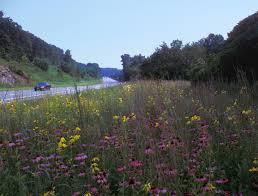 wildflower meadows let s get real