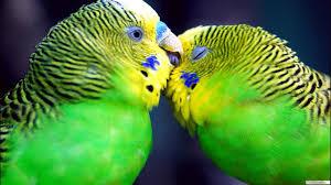 خلفيات ايفون طيور 2020 خلفيات طيور للايفون ارق الطيور للايفون