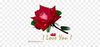 rose i love u wallpaper shekhar i